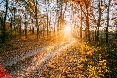 Winding Countryside Road Path Walkway Through Autumn Forest. Sun