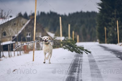 "Dog running with ""christmas tree"""