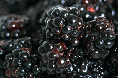 Fresh Ripe Blackberry - Healthy Eating