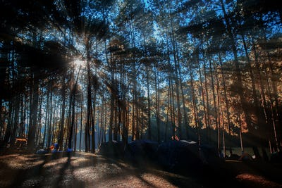 Camping in forest with sunrise