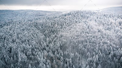 Pine tree woodland forest after snowfall, winter from above