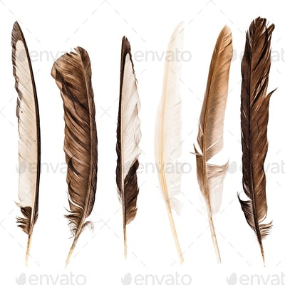 Feathers collection over white
