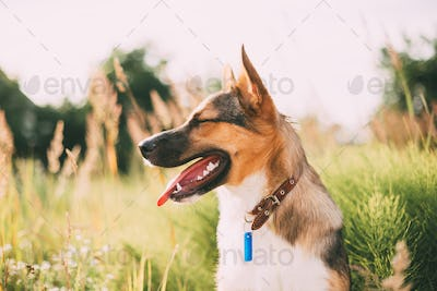 Portrait Of Mixed Breed Dog Sitting In Green Grass.