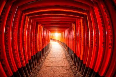 Torii gates, Fushimi Inari Shrine, Kyoto, Japan