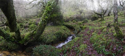 Mosses and green abound in the Atlantic rainforest