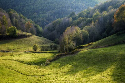 Green meadows for cattle farms