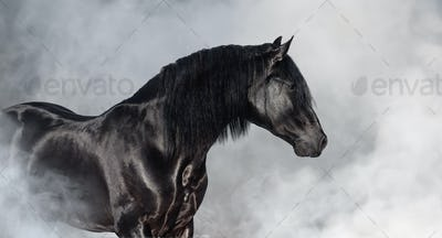 Black Pura Spanish stallion in light smoke.