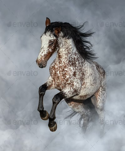 Appaloosa horse rearing in light smoke.