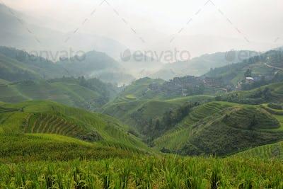 Views of green Longji terraced fields and Tiantouzhai village