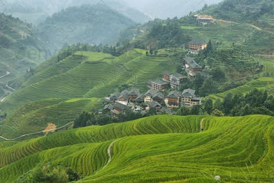 Views of green Longji terraced fields and Tiantouzhai village