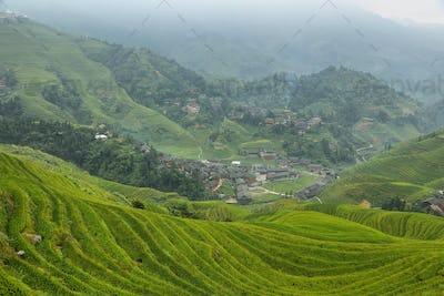 Views of green Longji terraced fields and Dazhai village