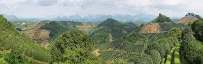 Karst mountains and kumquat trees plantation near Yangshuo