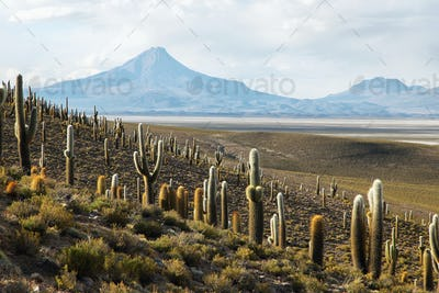Salar de Copiasa, Chile