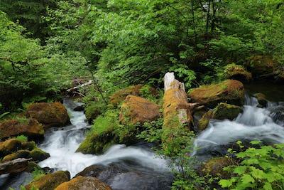 Silky water and lush vegetation near Watson falls