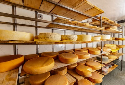 Different kinds of cheese