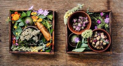Healing herbs,herbal medicine