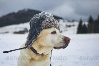 Funny portrait of dog with winter cap