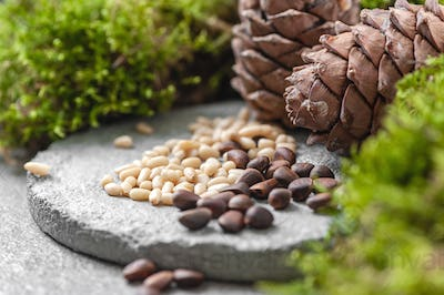 Pine cones, nuts and natural moss on a gray concrete background.