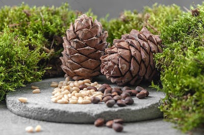 Pine cones and nuts. Composition with moss on a gray concrete ba