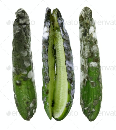 Rotten Cucumbers