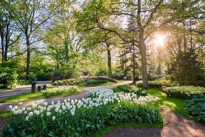 Keukenhof flower garden. Lisse, the Netherlands
