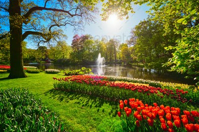 Keukenhof flower garden. Lisse, the Netherlands