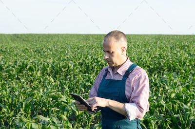 Farmer with tablet computer inspecting corn field summer sunny d