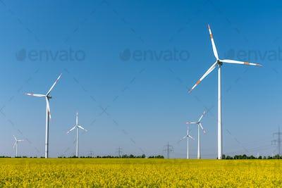 Modern wind turbines and flowering oilseed rape