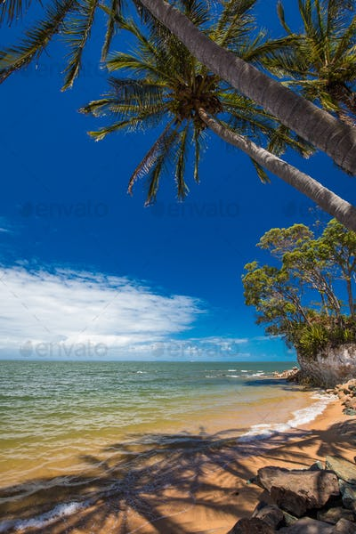 Palm trees on the south end of Suttons Beach, Redcliffe, Brisban