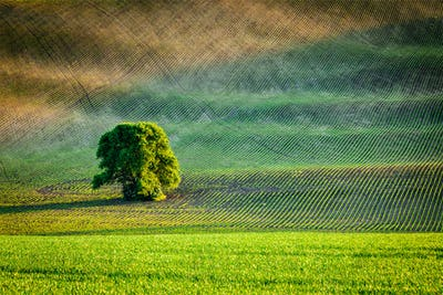 Lonely tree in ploughed field