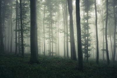 Surreal creepy woods