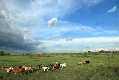 Meadow at Lake Anapa - Uganda, Africa