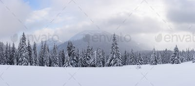 Panorama of fantastic winter landscape with snowy trees