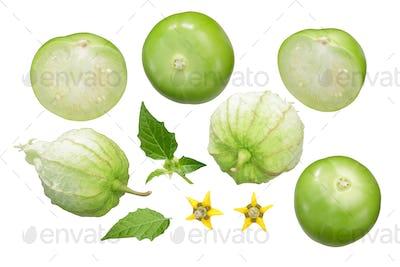 Tomatillo verde, husk tomato, physalis, paths
