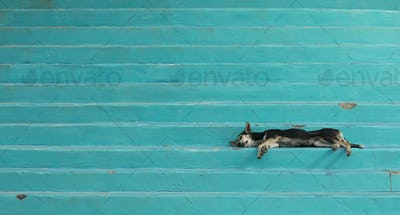 Lazy dog sleeping on colorful steps in Honduras.