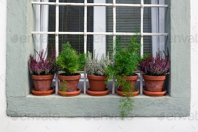 Row of flowers in red pots