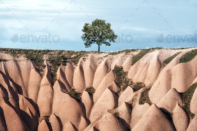 Alone tree in amazing hills in Cappadocia mountains