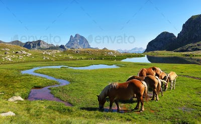 Horses grazing in Anayet plateau, Spanish Pyrenees, Aragon, Spain.