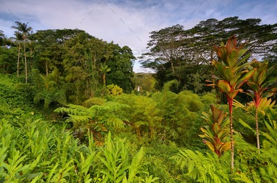 Tropical vegetation with Akaka falls at background