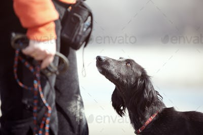 Tazy - Turkmenian Greyhound and Trainer Outdoors