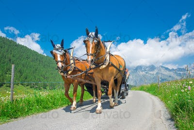 Horses pulling a carriage in mountain road