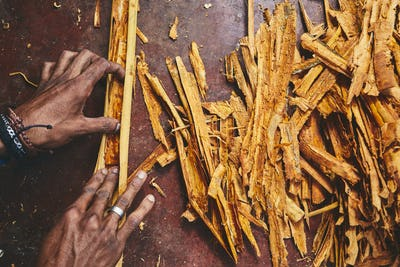 Production of the cinnamon sticks
