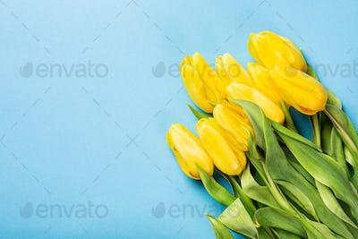 Yellow tulips background