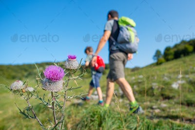 Mountain flowers with family on a hike