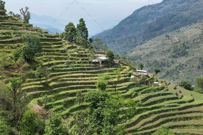 Fields and wooden houses in Nepal