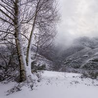 A couple of birches covered in ice facing a view of snowy mounta