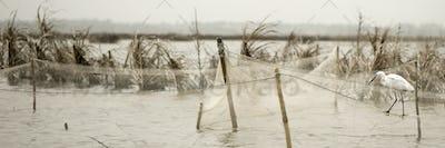 Bird standing on fishing nets