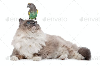 A parrot sitting on a cats head