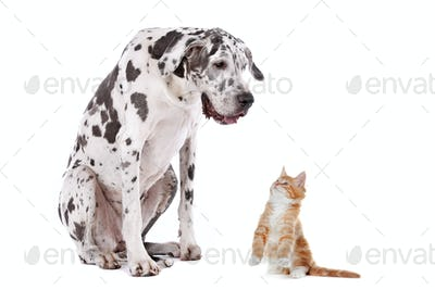 A dog and a cat