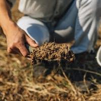 Soil Fertility Analysis. Female Agronomist Taking Soil Samples